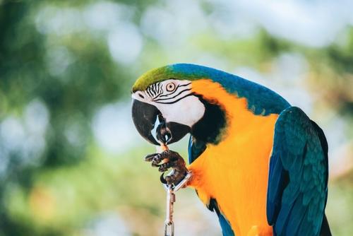 Visitez les parcs animaliers près de Montpellier
