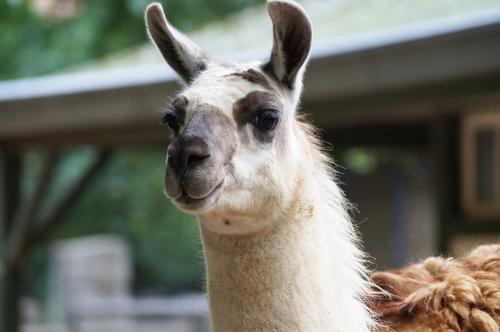 Visitez les parcs animaliers à proximité de Crépy-en-Valois